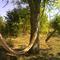 Forest garden Bogata Suma