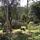 AMORAIMA - Permacultura Tropical