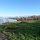Hollyhill Farm