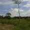 Habitat Palenque
