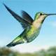 colibri organic farm