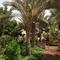 DESC Desert Food Forest