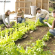Community Gardening at Gateways For Youth & Families