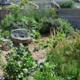 Many (Sub) Urban Edible Landscapes