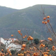 Casa Verde - Agroecologia