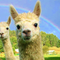 South Gippsland's rainbow valley eco-village