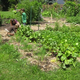 Beaver Valley Community Garden