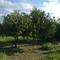 Pomona Farm