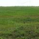 Merbok Food Forest