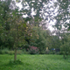 Pomonal Forest garden