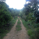 Taino Farm