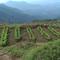 Biodynamic Food Farming Project