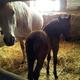 Equine Farm
