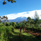 Recovery of Foodforestsystems at foot of Kilimanjaro