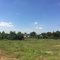 Hippo Farm