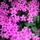 Perver Hanım Permakültür Bahçesi