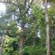 Mentawai Permaculture/ Permakultur Mentawai