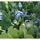 Hortas de Alegria - Happiness Gardens