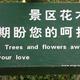 The Garden of Momo