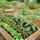 Santa Fe Urban Permaculture Network