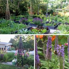 Colonial Garden Restoration