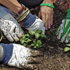 Cornerstone School Garden Program