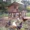 Millison Family Farms