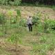 Replanting a Rainforest