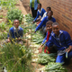 Sifiseshle Primary School Permaculture Project