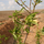 Zumot (Re)Forestation Project