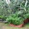 Punarvasu Farm