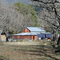Dancing TreePeople Farm