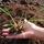 Plataforma de Permacultura