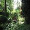 Permaculture garden in Deurne