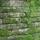 Maya Mountain Research Farm