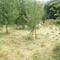 permaculture community garden