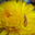 Vbpk lacewing