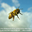 Paul Ciaramitaro