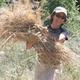 Silvia Peroni - reforestatioin consultant