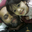 Mohammad Noman Hossain Chowdhury
