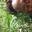 Modupe Olufunmi-Jacobs