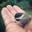 Birdjf