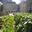 Jardin mcgill ensoleill%c3%a9