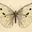 Kelly June Hutcheson